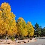 Hurkey Creek Park - Mountain Center, CA - County / City Parks