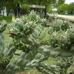 Cactus Country RV Park - San Antonio, TX - RV Parks