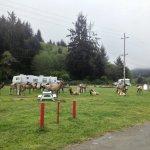 Elk Country RV Resort & Campground - Trinidad, CA - RV Parks