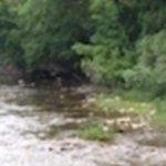 Creek N Wood RV Park - Bloomfield, NY - RV Parks