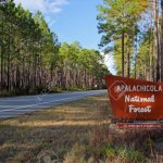 Wright Lake Campground Apalachicola National Forest - Bristol, FL - National Parks