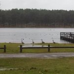 Seminole State Park - Donalsonville, GA - Georgia State Parks
