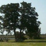 Cedar Creek Campground & Marina - Sealevel, NC - RV Parks