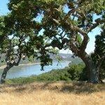 Coyote Lake Harvey Bear Ranch County Park - Gilroy, CA - County / City Parks