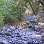 Bothe-Napa Valley State Park - Calistoga, CA - California State Parks