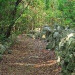 Dagny Johnson Key Largo Hammock Botanical State Park - Key Largo, FL - Florida State Parks