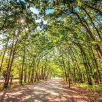 Lake Tawakoni RV Campground - Point, TX - Thousand Trails Resorts