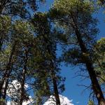Manzano Mountains State Park  - Mountainair, NM - New Mexico State Parks