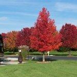 Cottonwoods RV Park - Columbia, MO - RV Parks