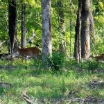 Lake Bistineau State Park - Doyline, LA - Louisiana State Parks