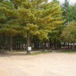 Pineland Camping Park - Arkdale, WI - RV Parks
