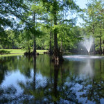 Bayou Wilderness RV Resort - Carencro, LA - RV Parks