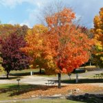 America's Best Campground - Branson, MO - RV Parks