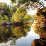 Suwannee River State Park - Live Oak, FL - Florida State Parks