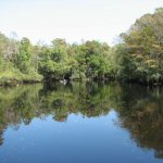 Lumber River State Park - Orrum, NC - North Carolina State Parks
