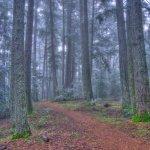 Sanborn County Park - Saratoga, CA - County / City Parks