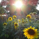 Sleepy Sunflower RV Park  - Ogallala, NE - RV Parks