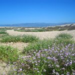 McGrath State Beach - Oxnard, CA - RV Parks