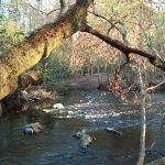 O'Leno State Park - High Springs, FL - Florida State Parks