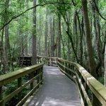 Highlands Hammock State Park - Sebring, FL - Florida State Parks