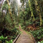 Prairie Creek Redwoods State Park - Orick, CA - California State Parks