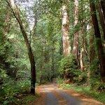Butano State Park - Pescadero, CA - California State Parks