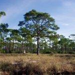 Dr. Julian G. Bruce St. George Island State Park - St. George Island, FL - Florida State Parks