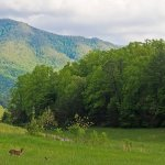 Cades Cove Campground - Townsend, TN - RV Parks