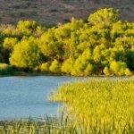 Patagonia Lake State Park  - Patagonia, AZ - Arizona State Parks