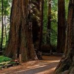 Santa Cruz Redwoods RV Resort - Felton, CA - RV Parks