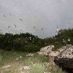 Kickapoo Cavern State Park - Brackettville, TX - Texas State Parks