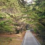 MacKerricher State Park - Fort Bragg, CA - California State Parks