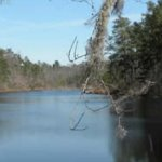 Mill Creek Park  - Pinewood, SC - County / City Parks