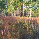 Lower Wekiva River Preserve State Park - Sanford, FL - Florida State Parks
