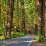 Shoreline RV Park - Eureka, CA - RV Parks