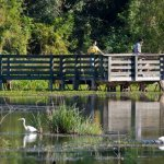 Brazos Bend State Park - Needville, TX - Texas State Parks