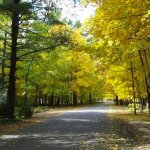 Sandy Pines  - Hopkins, MI - RV Parks