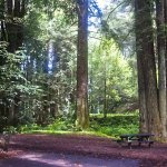 Navarro River Redwoods State Park - Albion, CA - California State Parks