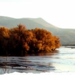 Leasburg Dam State Park - Radium Springs, NM - New Mexico State Parks