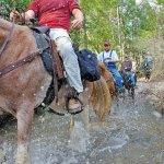 Timber Camp Equestrian Group Campground - Phoenix, AZ - National Parks