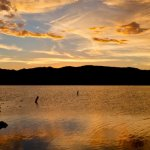 Alamo Lake State Park - Wenden, AZ - Arizona State Parks