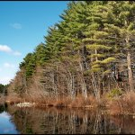 Pachaug State Forest - Voluntown, CT - RV Parks