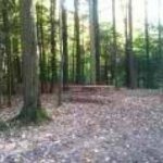 Piney Woods Campsites - North Rose, NY - RV Parks