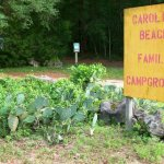 Carolina Beach Campground - Wilmington, NC - RV Parks