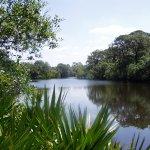 Oscar Scherer State Park - Osprey, FL - Florida State Parks