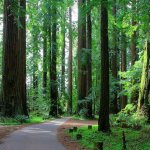 Grizzly Creek Redwoods State Park - Carlotta, CA - California State Parks