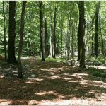 Tall Timbers Campground - Sussex, NJ - RV Parks