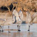 Bosque Bird Watchers Rv Park - San Antonio, NM - RV Parks