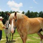 Cathead Creek Ranch & RV Park - Townsend, GA - RV Parks