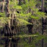 Caddo Lake State Park - Karnack, TX - Texas State Parks